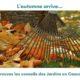 Actu - Taille et préparation des plantations avant le froid -LES JARDINS EN CASCADES